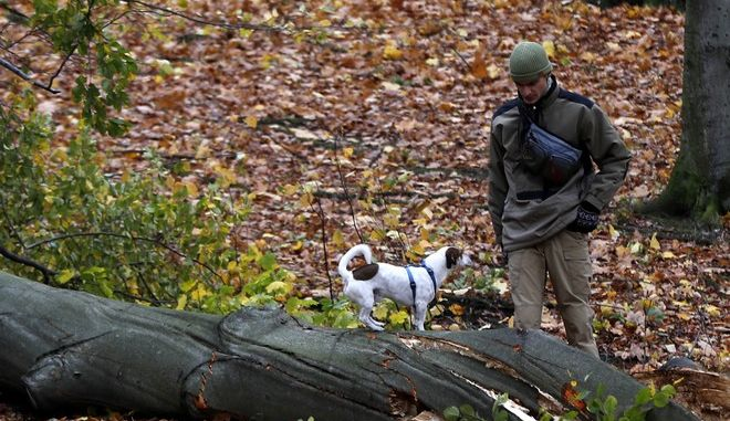 Man walks his dog past a fallen tree in a Stromovka park in Prague, Czech Republic, Sunday, Oct. 29, 2017. At least two persons have died in Czech Republic as high winds have struck the country. (AP Photo/Petr David Josek)