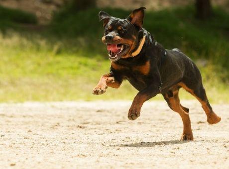f46a04099bd Μωρό 14 μηνών σκοτώθηκε από επίθεση σκύλου της οικογένειάς του ...