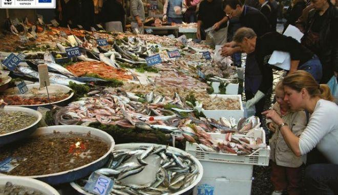 WWF: Μια έξυπνη εφαρμογή για να μάθουμε να τρώμε το σωστό ψάρι, τη σωστή εποχή