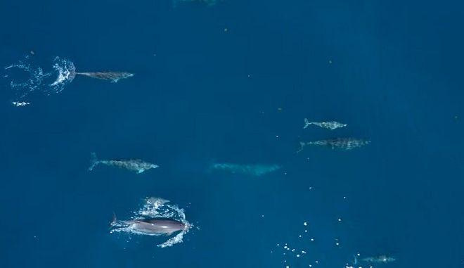 Θεολόγος: Οι τουρίστες φεύγουν, τα δελφίνια επιστρέφουν