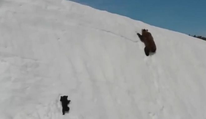 """Το μικρό αρκουδάκι που συγκίνησε τον πλανήτη και """"ένωσε"""" Άδωνι και Καμμένο"""