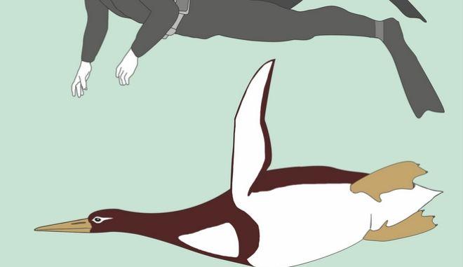 Βρέθηκε απολίθωμα γιγάντιου πιγκουίνου με ύψος ανθρώπου