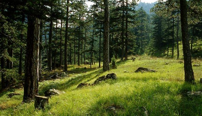 Προσέχουμε για να έχουμε: Ποια τα μέτρα πρόληψης των δασικών πυρκαγιών