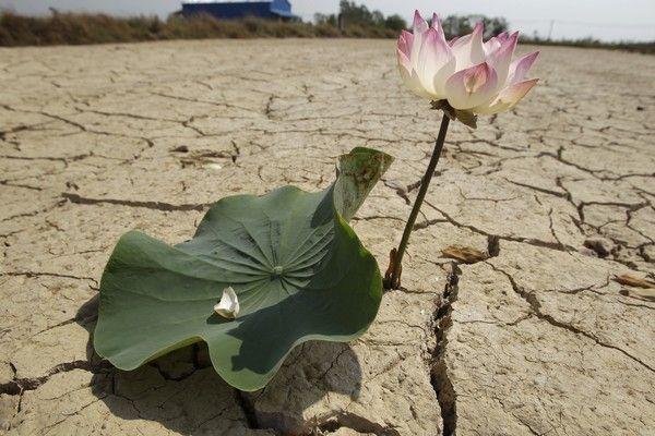 Λουλούδι ανθίζει στο λιγότερο αναμενόμενο σημείο... ένα κομμάτι ξεραμένης γης