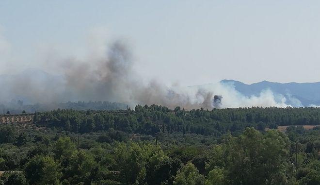 """Αρχαία Ολυμπία: """"Μάχη"""" με τις φλόγες στον Ξηρόκαμπο - Μεγάλη κινητοποίηση της Πυροσβεστικής"""