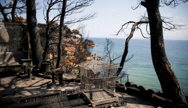Εικόνες από το Μάτι, μια εβδομάδα μετά την καταστροφική πυρκαγία.