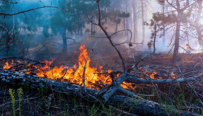 Φωτία σε δάσος