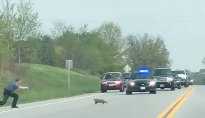 Αστυνομικός πυροβολεί και σκοτώνει ζώο που είχε προκαλέσει κίνηση στο δρόμο