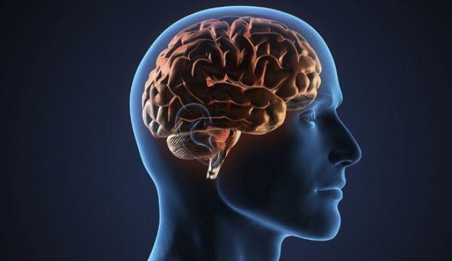 Ανακαλύφθηκε γονίδιο που φέρνει περισσότερη εξυπνάδα και καλύτερη μνήμη