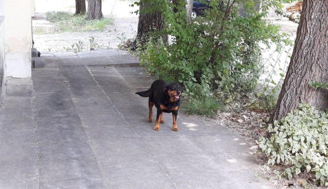 Κιλκίς: Επιθέσεις από αδέσποτους σκύλους σε ασθενείς και προσωπικό νοσοκομείου