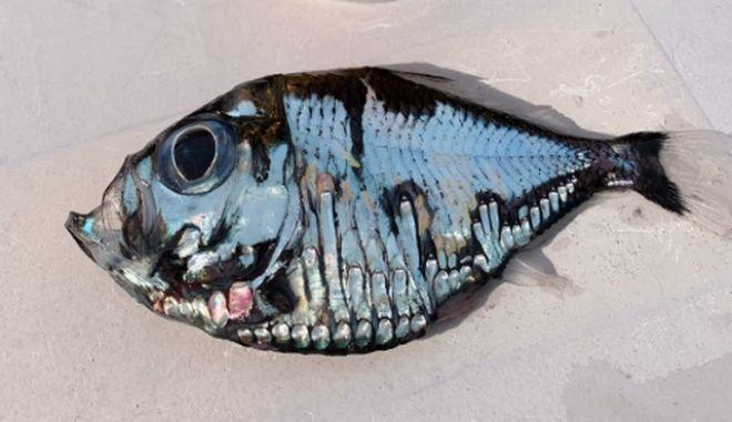 """Το """"μεταλλικό"""" τροπικό ψάρι που έγινε viral και τρέλανε το Twitter"""
