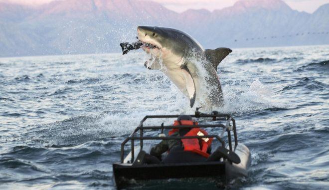 Μακροβιότεροι οι λευκοί καρχαρίες