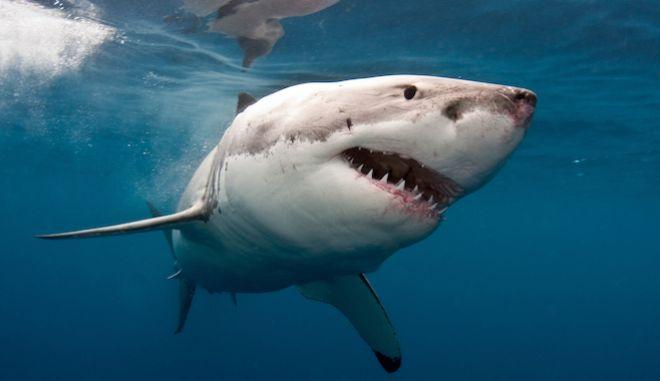 Στην Αυστραλία οι 6 στους 10 θανάτους από επίθεση καρχαρία το 2020