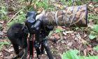 Πιθηκάκι με αδυναμία στις φωτογραφίες