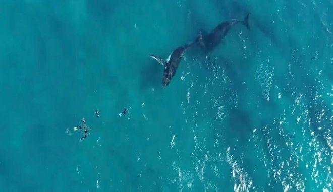 """Απίστευτη στιγμή: Δύτες έρχονται σε """"απόσταση αναπνοής"""" με μεγάπτερες φάλαινες"""