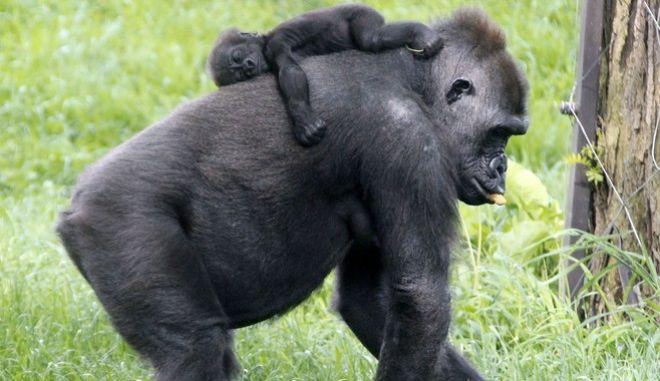 Πίθηκοι (φωτό αρχείου)