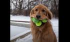 Σκύλος που κατέκτησε ρεκόρ guinness