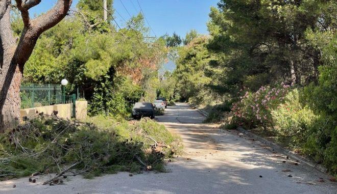 Κάτοικοι των βόρειων προαστίων ζουν με βουνά κλαδιών, κομμένων δέντρων και σκουπιδιών έξω από τις πόρτες τους
