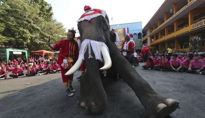 Ελέφαντες ντυμένοι Αγιοβασίληδες