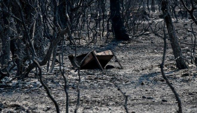 Φωτιά στα Βίλια: Ενισχύθηκαν οι δυνάμεις πυρόσβεσης - Στάχτη χιλιάδες στρέμματα πυκνού πευκοδάσους