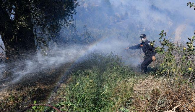 Πυρκαγιά σε δασικη έκταση στην Ηλεία