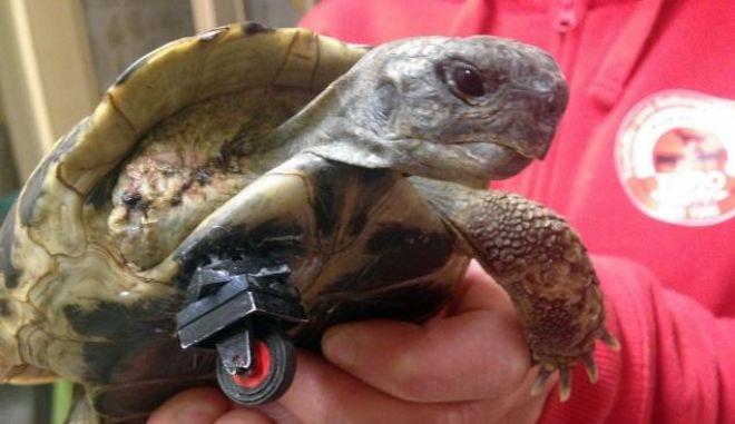 Χελώνα περπατά ξανά χάρη στη Lego