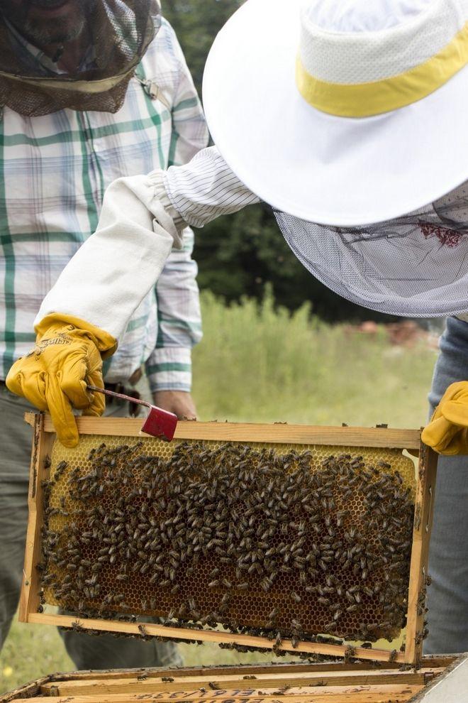Μελισσοκομία και αρωματικά φυτά στους πρόποδες του Ολύμπου