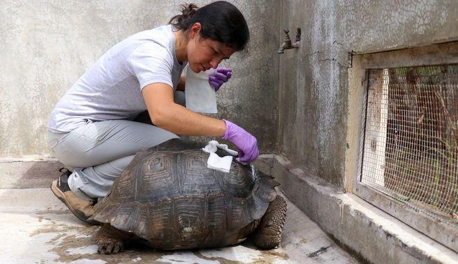 Πρόστιμο για οδηγό λεωφορείου στον Ισημερινό επειδή πάτησε χελώνα που απειλείται με εξαφάνιση