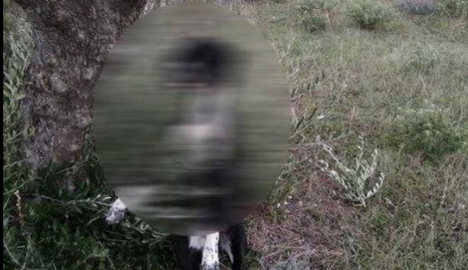Φρίκη στην Κάρπαθο: Κρέμασαν σκύλο από ελιά