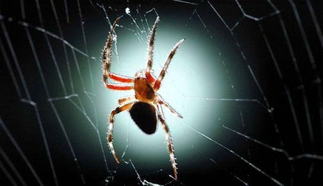 Χορδές βιολιού από ιστό αράχνης