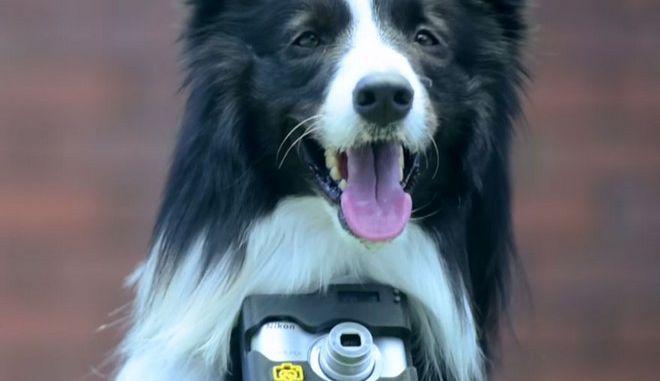 Φωτογραφίες από καρδιάς: Σκύλος φωτογράφος απαθανατίζει την πηγή της χαράς του