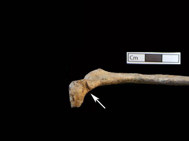 Αμφίπολη: Πέντε οι σκελετοί που βρέθηκαν στον τάφο. Μια γυναίκα, τρεις άνδρες και ένα μωρό