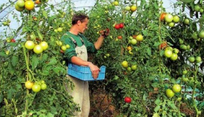 Ενημέρωση νέων αγροτών από ανενημέρωτους