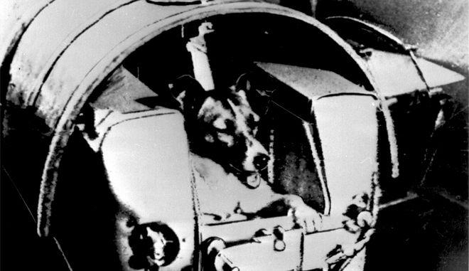 """Polarhuendin Laika - erster """"Passagier"""" eines russischen Satelliten. (AP-Photo/HO) November 1957"""