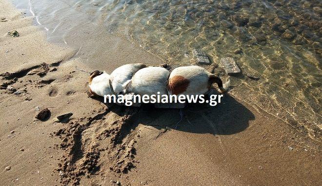 Κτηνωδία στο Βόλο: Έδεσαν πέτρες σε σκύλο και το πέταξαν στη θάλασσα