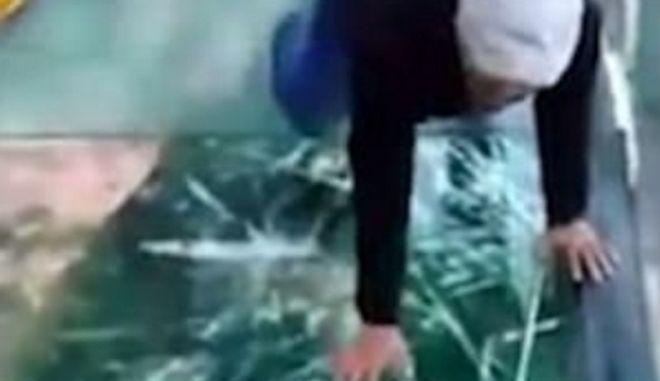 Τρόμος σε άλλο επίπεδο: Όταν 'σπάει' γυάλινη γέφυρα κάτω από τα πόδια σου