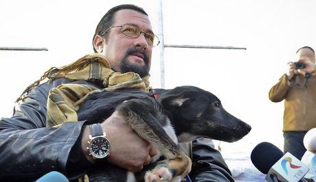 """Ο  """"σκληρός""""  Στίβεν Σιγκάλ υιοθέτησε αδέσποτο σκύλο στο Βουκουρέστι για να μην το αφήσουν στο δρόμο"""