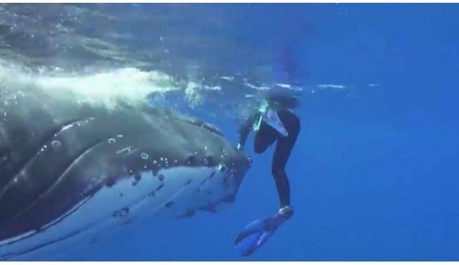 Μοναδικό βίντεο: Φάλαινα σώζει δύτρια από επίθεση καρχαρία