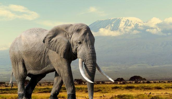 Ελέφαντας στην Κένυα (φωτογραφία αρχείου)