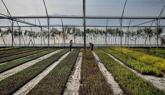 Ελληνικά Φυτώρια: 10 χρόνια προετοιμασία για την επόμενη ημέρα της Χαλκιδικής