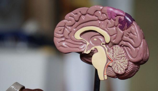 Πώς λειτουργεί ο ανθρώπινος εγκέφαλος
