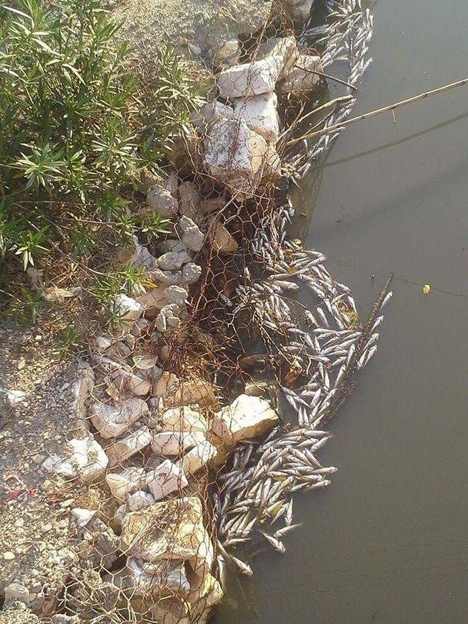 Θλιβερές εικόνες στην Κέρκυρα: Δεκάδες νεκρά ψάρια επιπλέουν στο ποτάμι της Λοξίδας