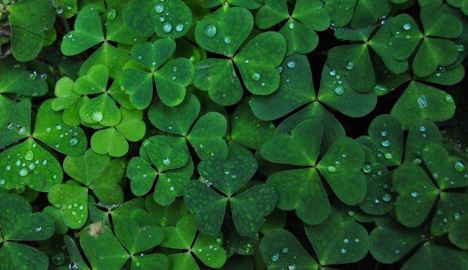 Φονιάδες των νερών, Ιρλανδοί