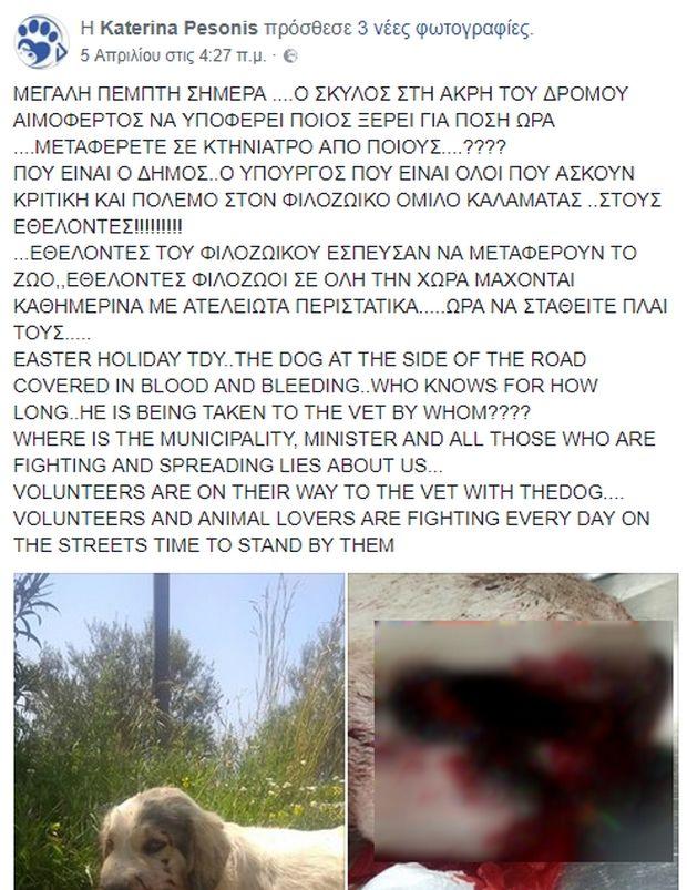 Καλαμάτα: Από τροχαίο κι όχι κροτίδες πέθανε ο σκύλος που βρέθηκε βαριά τραυματισμένος