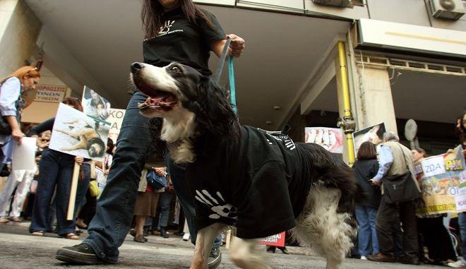 Φωτό αρχείου: Διαμαρτυρία ζωοφιλικών οργανώσεων,πολιτών και φορέων στο Υπουργείο Αγροτικής Ανάπτυξης,για την κακοποίηση των ζώων συντροφιάς