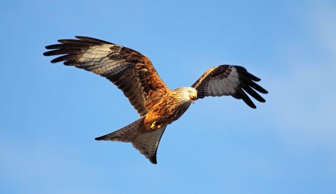 Στο σκαμνί 45χρονος για κλοπή φτερών πτηνών αξίας 6 εκατ. δολαρίων
