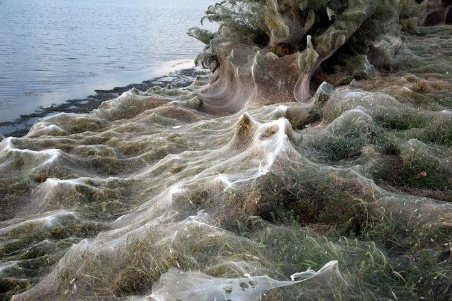 Τεράστιος ιστός αράχνης