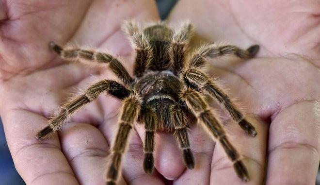 Έτσι θα μπορούσαν οι αράχνες να αφανίσουν τους ανθρώπους μέσα σε ένα χρόνο
