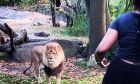 Βίντεο: Γυναίκα έρχεται τετ-α-τετ με λιοντάρι σε ζωολογικό κήπο για να δείξει ότι δεν φοβάται