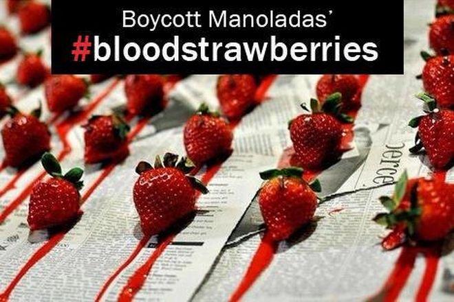 Παραγωγοί φράουλας Μανωλάδας: